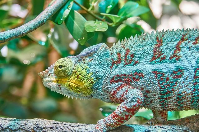 chameleon na větvičce.jpg