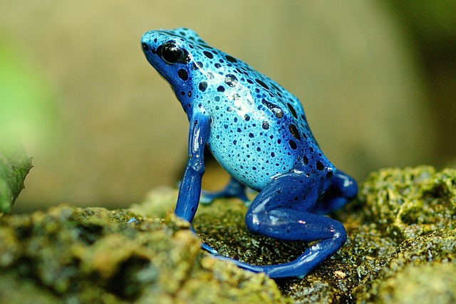 modrá žába.jpg