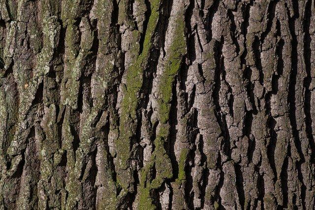 kůra stromu (dub)